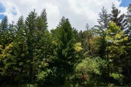 Frangeli House Front Gardens 3
