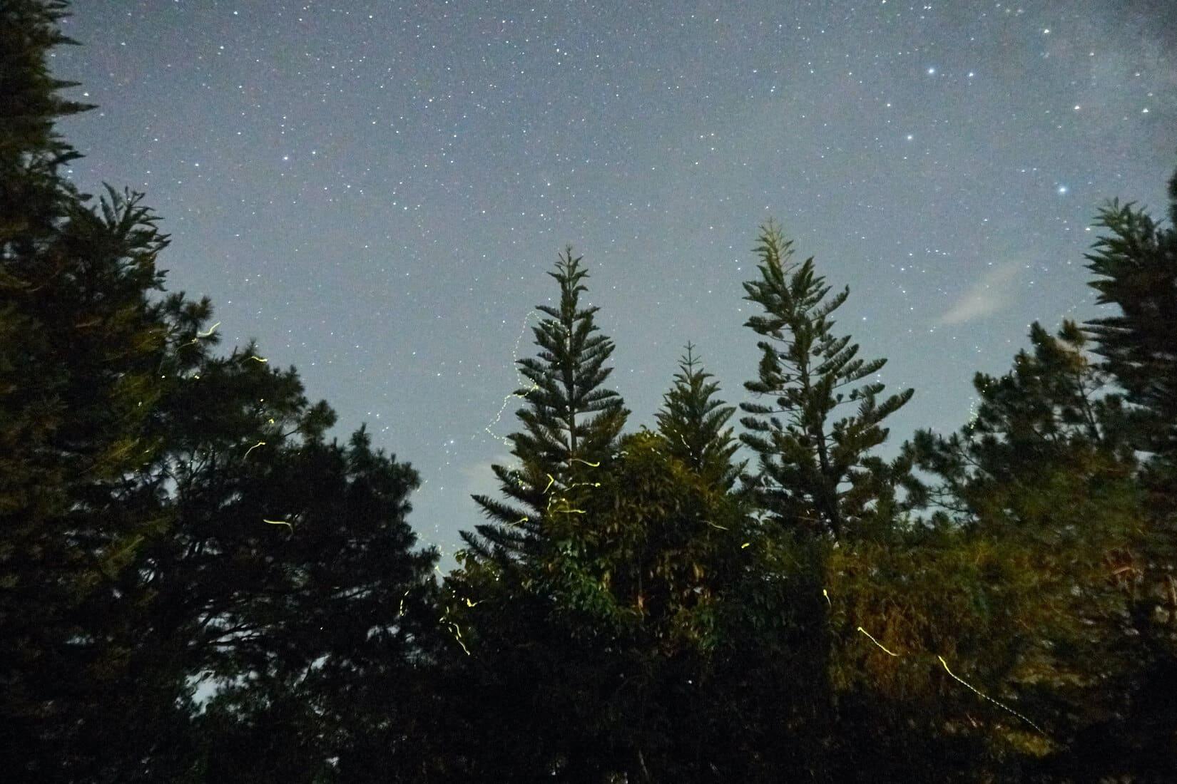 Frangeli House Fireflies Baguio 0